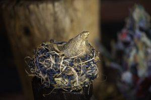 golden bird in paper nest